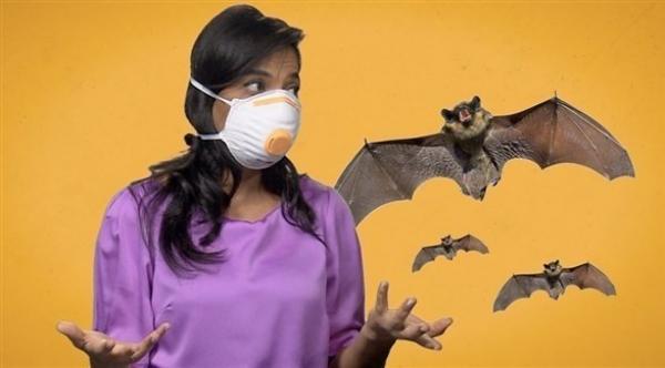 هل الخفافيش لها علاقة بأصل كورونا ؟..دراسة تقترب من فك اللغز