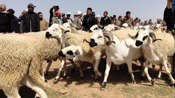 فلكيا.. هذا هو موعد عيد الأضحى في المغرب!