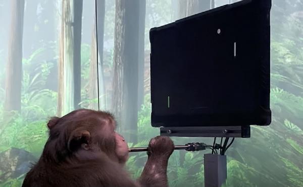 """إيلون ماسك يفاجئ العالم بفيديو قرد وهو  يتحكم بلعبة """"بونغ"""" بواسطة شريحة في دماغه"""