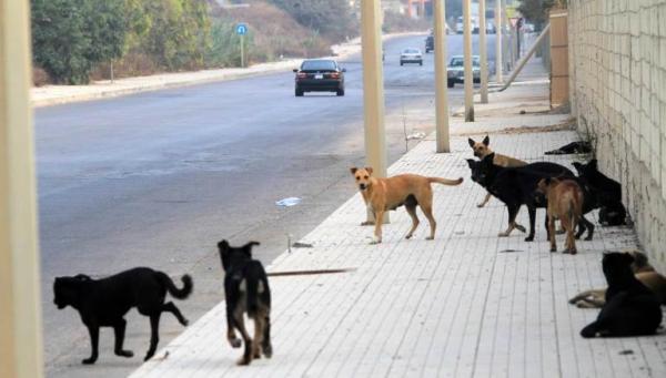 بالفيديو ..الحيوانات تسيطر على شوارع المدن الخالية نتيجة الحجر الصحي