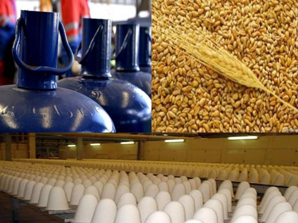 زيادات كبيرة منتظرة في الأسعار...الحكومة تقرر رفع الدعم عن السكر والدقيق والغاز وتحدد جدولة زمنية لتنفيذ القرار