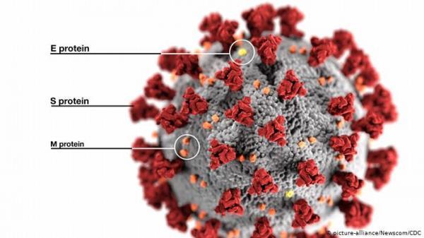 """دراسة جديدة:""""بروتين سبايك"""" مفتاح لغز فيروس كورونا!"""