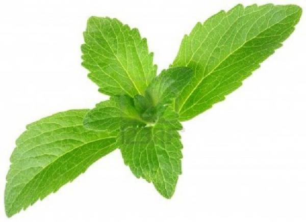 نبتة مرشحة كبديل طبيعي للسكر خالي من السعرات