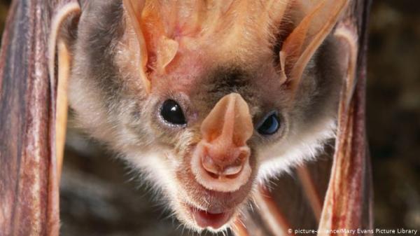 ما حقيقة أكبر خفاش على الأرض في الفلبين؟