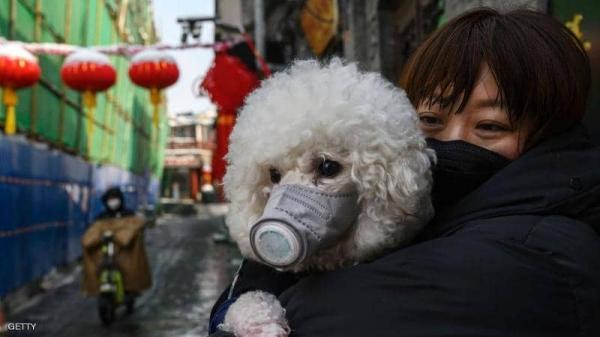 الحيوانات ونشر فيروس كورونا.. دراسة حديثة توضح العلاقة