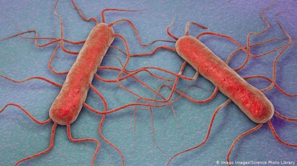 علماء ينجحون في إعادة إحياء بكتيريا عمرها ملايين السنين