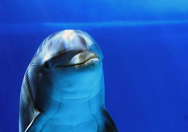 ما حقيقة علاقة الصداقة بين الدلفين والإنسان؟