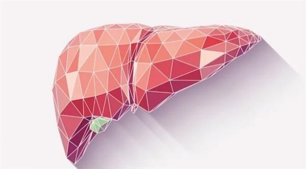 فريق أمريكي يطور أول كبد اصطناعي بتقنية الطباعة ثلاثية الأبعاد في العالم
