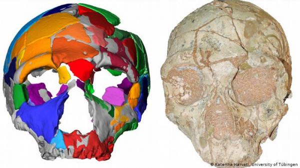 """جمجمة """"هومو سابينس"""" تغير تاريخ الإنسان العاقل في أوروبا"""