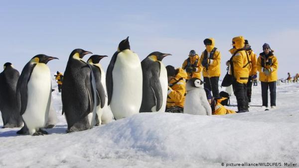 الإقامة الطويلة بالقطب الجنوبي تسبب انكماشا في المخ