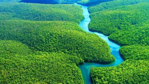 لهذه الأسباب.. غابات الأمازون مهمة جداً للعالم كله!