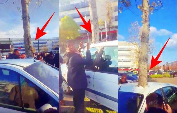 """الفيديو الذي حير العالم: """"شجرة"""" تخترق """"سيارة"""" وسط ذهول الجميع (فيديو)"""