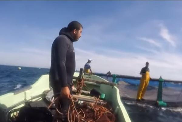"""ما دور تربية الأحياء البحرية ضمن مخطط """"المغرب الأزرق""""؟"""