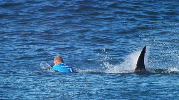 قرش تمزق ساق راكب أمواج  و يتسبب في وفاته  !