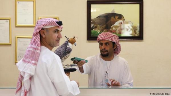 الصقور في الإمارات... مشفى وجواز سفر ومعاملة خاصة على الطائرة