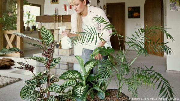 لعلاج اكتئاب كورونا.. تطبيقات ذكية لزراعة النباتات المنزلية