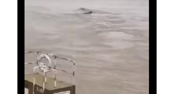 """اكتشاف """"وحش مائي"""" ضخم طوله 18 مترا في الصين (فيديو)"""