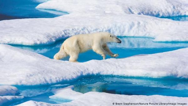 تقلص الجليد في القطب الشمالي إلى ثاني أدنى مستوى مسجل