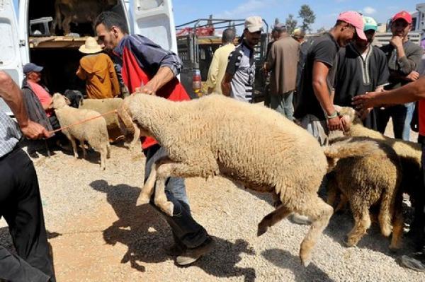 عيد الأضحى بالمغرب... طقوس دينية متجذرة ومهن موسمية