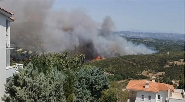 مربي نحل يتسبب في اندلاع حريق هائل بغابات ضواحي أثينا