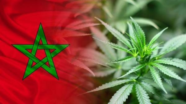 """المغرب يُصوّت على قرار تاريخي مرتبط ب""""الحشيش"""""""