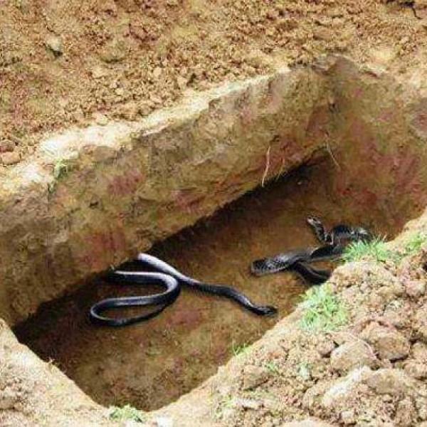 """خرافات متداولة عن مرحلة ما بعد الموت: لا وجود لعذاب القبر و""""الثعبان الأقرع"""" ولا شيء اسمه """"عزرائيل"""""""