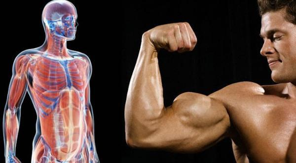 أطعمة طبيعية لزيادة هرمون التستوستيرون