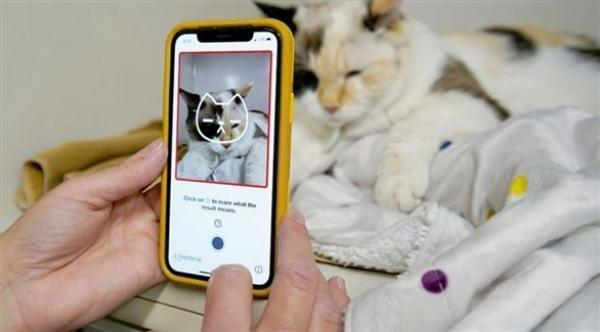 تطبيق على الهاتف للتعرف على صحة القطط النفسية