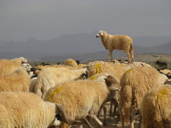 """حزب مغربي يقترح إلغاء """"عيد الأضحى"""" بسبب جائحة """"كورونا"""""""