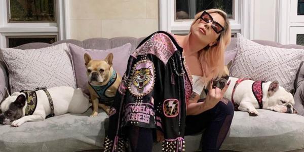 """المغنية """"ليدي غاغا"""" تخصص مكافأة نصف مليون دولار لمن يعثر على كلبيها(فيديو)"""