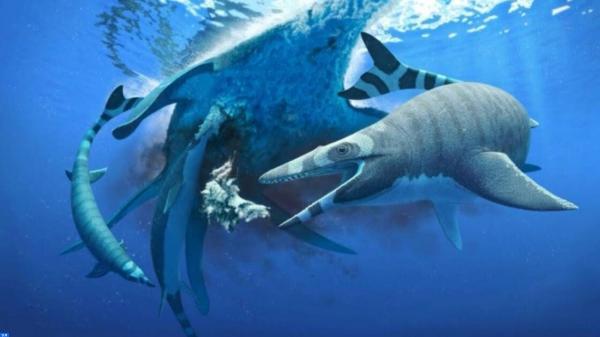 علماء يكتشفون لأول مرة نوعا جديدا من السحالي البحرية كان يعيش بالمغرب
