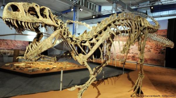 للبيع على إيباي.. عظام لديناصور صغير عمره 68 مليون سنة!