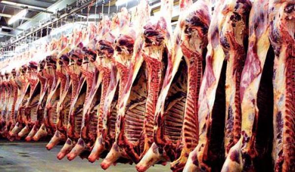 خطير :  ختم أطنان من اللحوم الحمراء بطوابع سرية مزورة