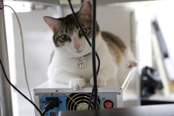 معلومات عن أعراض حساسية القطط يجب معرفتها