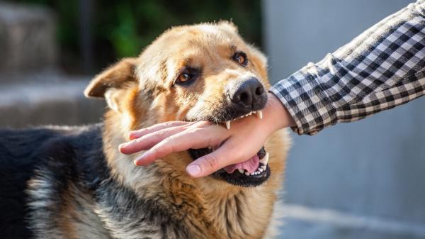 المرجو الحذر...عضة كلب تزهق روح شخص ببني ملال بعد 3 أشهر من وقوعها