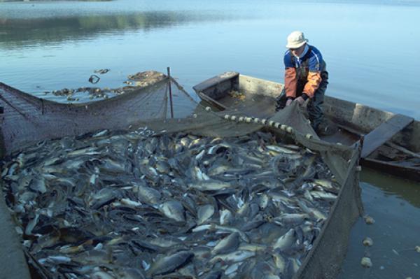 أزيد من 526 مليون درهم قيمة مفرغات الأسماك بميناء طانطان سنة 2020