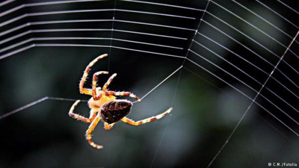 دراسة: العناكب تنشط في البيت عند الساعة 19.35 مساء