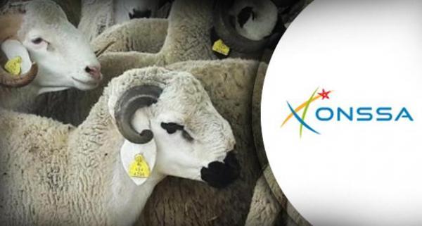 """""""أونسا"""": عيد الأضحى مر في ظروف جيدة على مستوى الجودة والصحة الحيوانية"""
