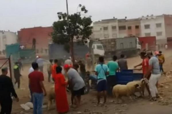 """على هامش فوضى سوق الماشية: هل نحن شعب """"شفار""""؟"""