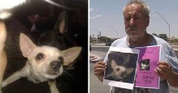 بعد تعب من البحث عليها.. أمريكي مستعد لتقديم منزله والأرض المحيطة به كمكافأة لمن يعيد إليه كلبته