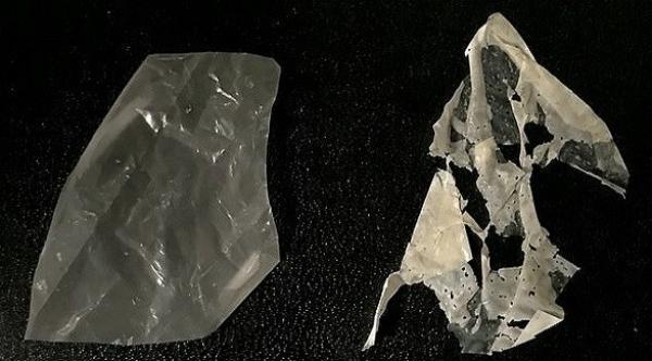 علماء يطورون أول مادة بلاستيكية قابلة للتحلل البيولوجي في غضون أسابيع
