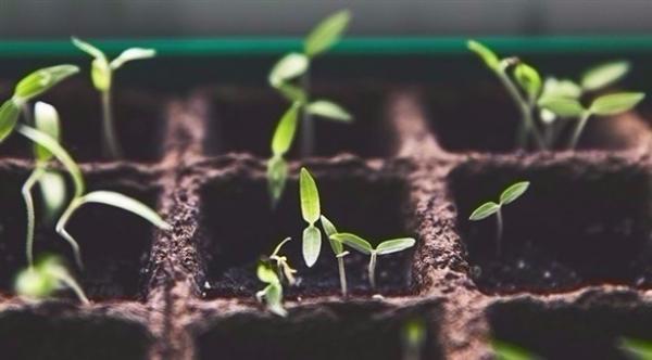 عالمة تطور نباتات تقاوم التغير المناخي والفيضانات والجفاف
