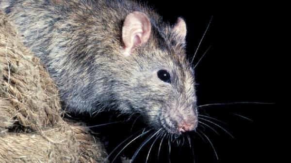 علماء يحذرون :حيوانات معروضة للبيع في اسواق آسيا قد تكون مصدرا للفيروسات القاتلة