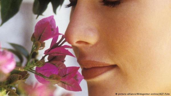 النبات لديه وسائل إدراك شبيهة بحواس الانسان