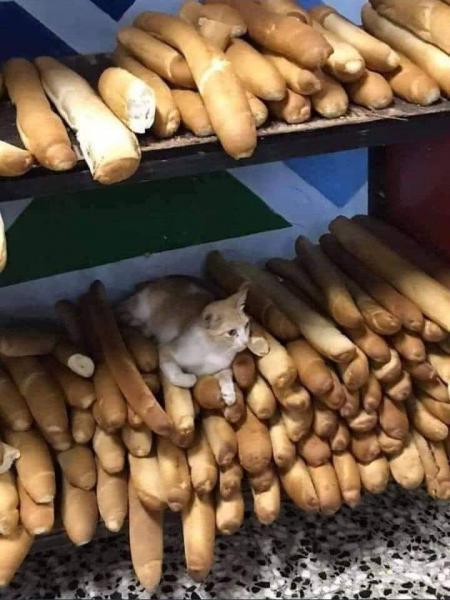 بصحتكم خبز السوق !!!