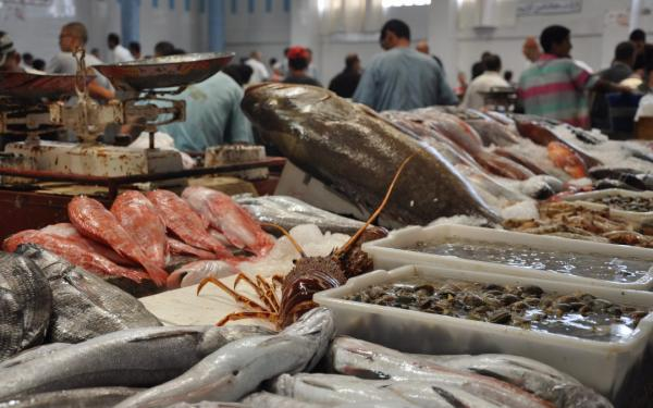تواصل إغلاق أسواق السمك بالدار البيضاء بعد ظهور بؤر وبائية جديدة