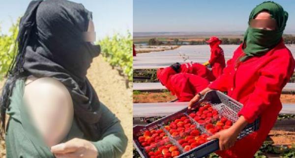 القضاء الإسباني يصدم العاملات الموسميات المغربيات ضحايا التحرش بحقول الفراولة