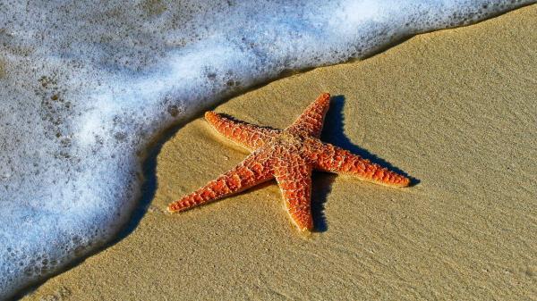 """عيون العالم على المغرب بعد العثور على """"نجم بحري أحفوري"""" يعود تاريخه إلى 480 مليون سنة"""