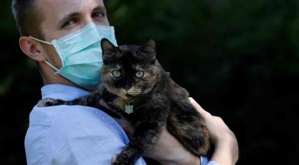 دراسة: الإنسان قد يتسبب في نقل العدوى كورونا للقطط والكلاب