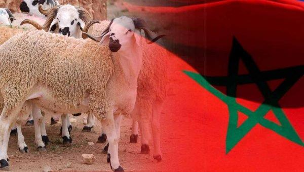 أنباء عن إقرار تدابير استثنانية خلال عيد الأضحى وفرض رخصة خاصة لذبح الأضحية بالمغرب